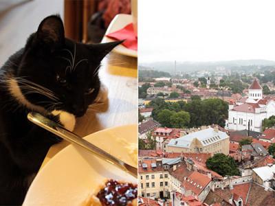 Вильнюс: Cat Café и старый город